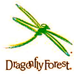 DragonFly Forest Summer Camps